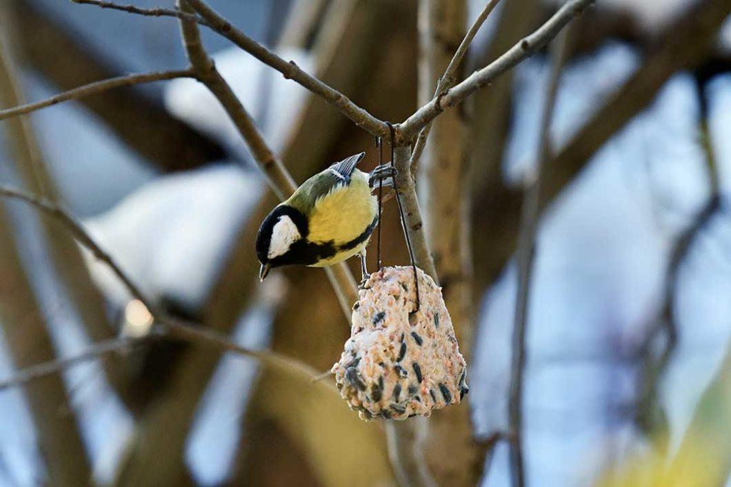 Zimowe ciasteczka dla ptaków