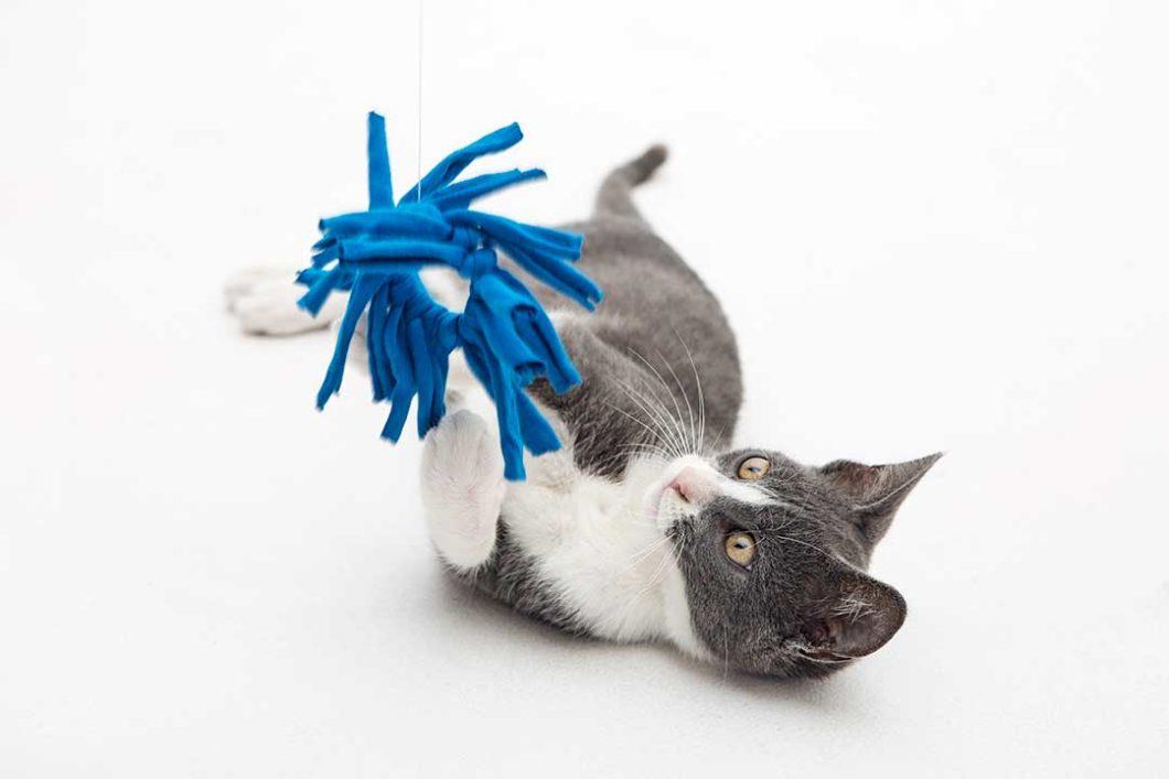 Przerób nakretkę na zabawkę z frędzlami dla kota