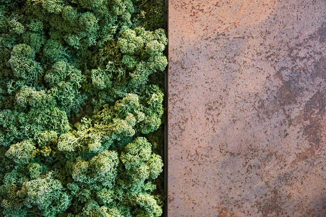 Żyj pięknie - Zrób samemu zieloną ścianę zmchu chrobotka