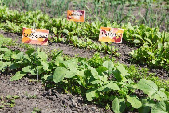 Żyj pięknie - Zrób etykiety do ogrodu ze sklejki i wieszaków