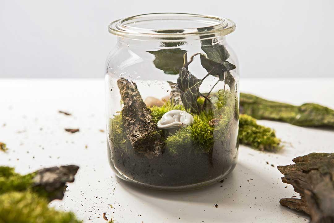 Żyj pięknie - Zrób swój własny las wsłoiku