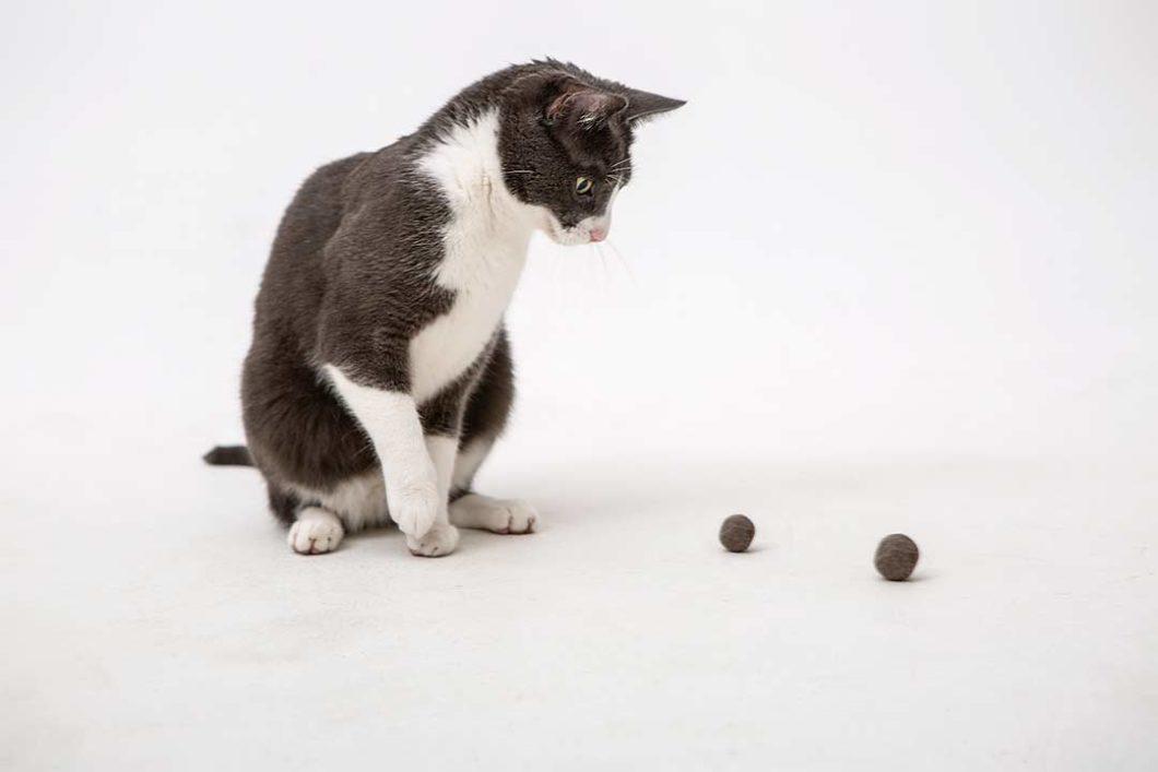 Żyj pięknie - Zrób zabawkę dla kota z jego wyczesanego podszerstka