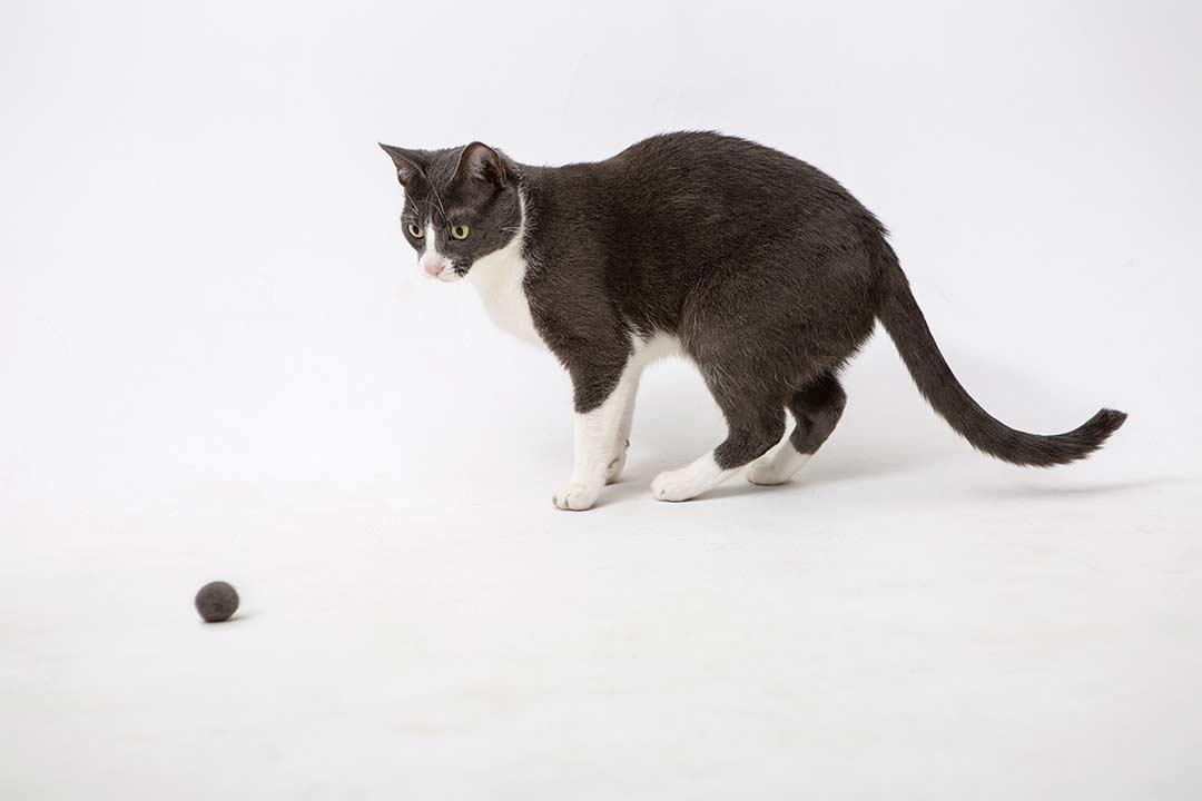 Żyj pięknie - Zrób zabawkę dla kota zjego wyczesanego podszerstka