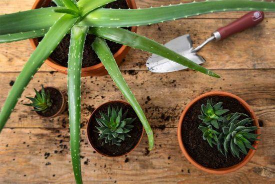 Żyj pięknie - Zamień rozbitą donicę na drenaż dla roślin
